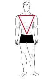 Hình dạng cơ thể hình chữ V